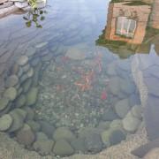 Дачные водоемы